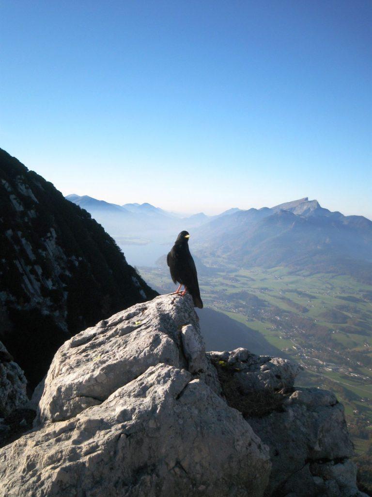10-Seen-Trail_Salzkammergut (5)